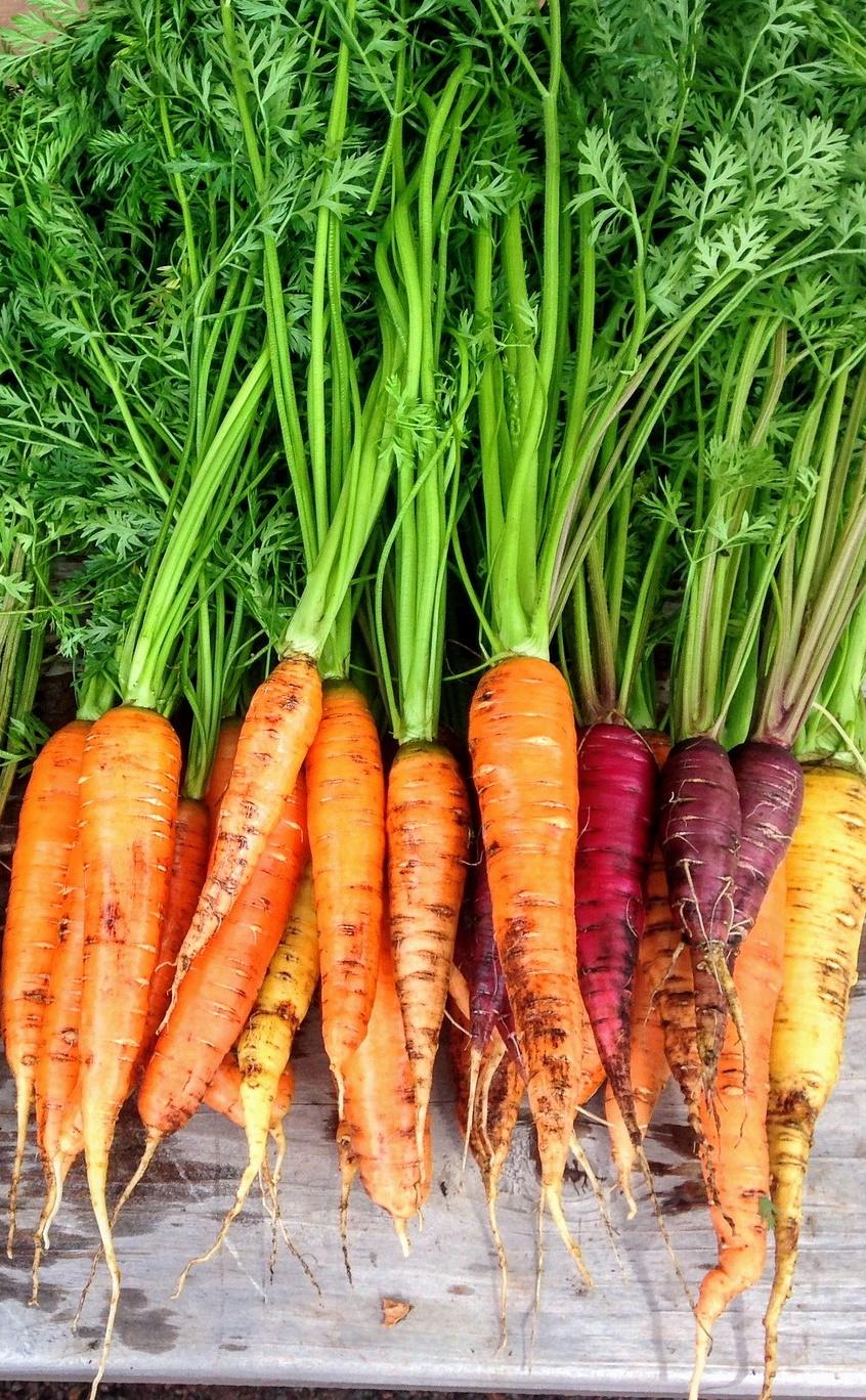 Möhre, Karotte, MS Ernährung, gesund Ernährung