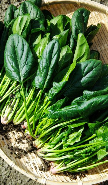 Spinat, Superfood, MS Ernährung, gesunde Ernährung, grünes Gemüse